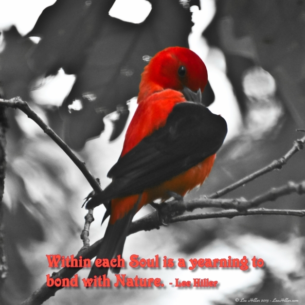 Within each Soul is a yearning to bond with Nature. ~ Lee Hiller