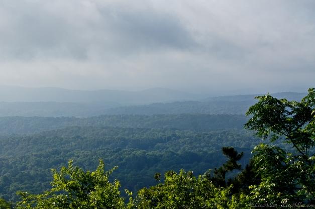 Rainforest in Hot Springs National Park, Arkansas