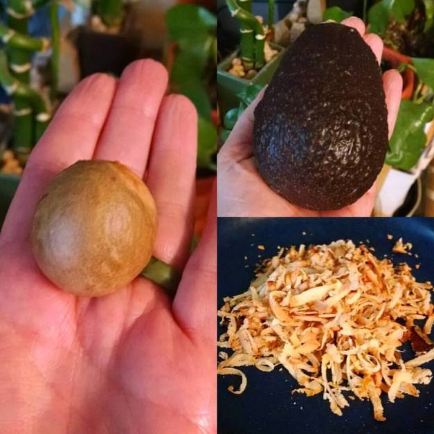 Smoothie 101: Avocado Seed for your Smoothies